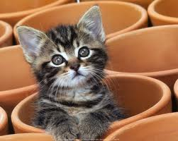 Potted Kitten