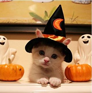 Halloween Cat Contest - The Catnip Times