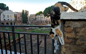 Cats thrive in the ruins of the Largo Argentina, where Caesar was assassinated by Brutus, but they won't for much longer if the municipality gets its way.